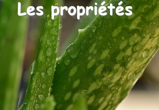 Aloe vera les proprietes flp aloe christine