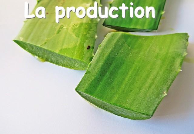 Aloe vera production flp aloe christine